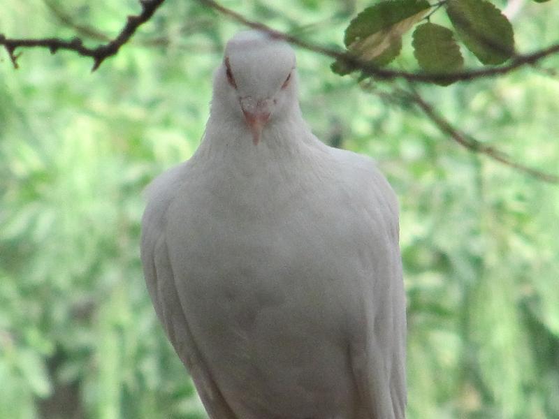 צ'ינדאו -  גן החיות